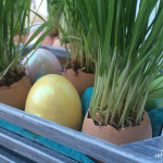 grass in egg shells for easter