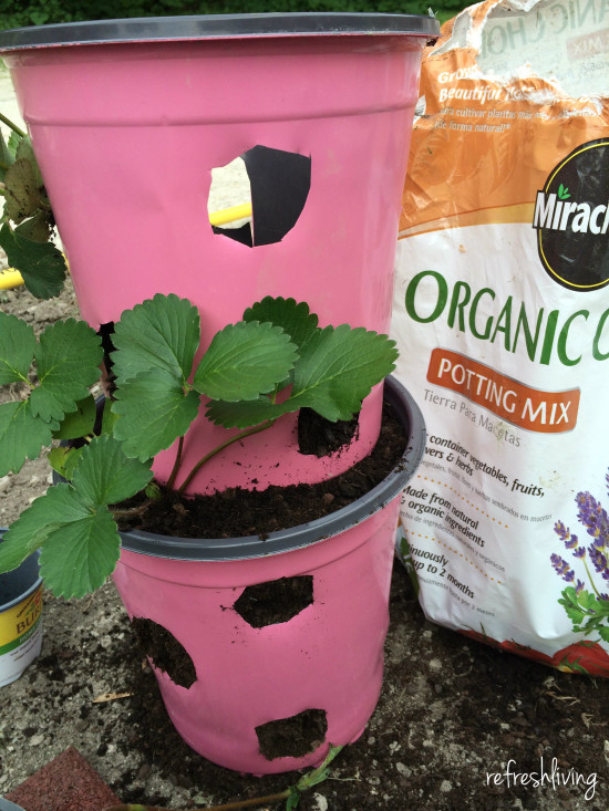 diy strawberry pot
