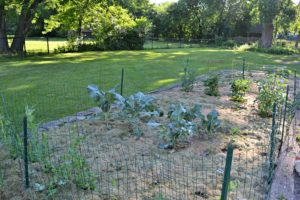 Using grass clippings can be a cheap way to keep weeds out of a vegetable garden