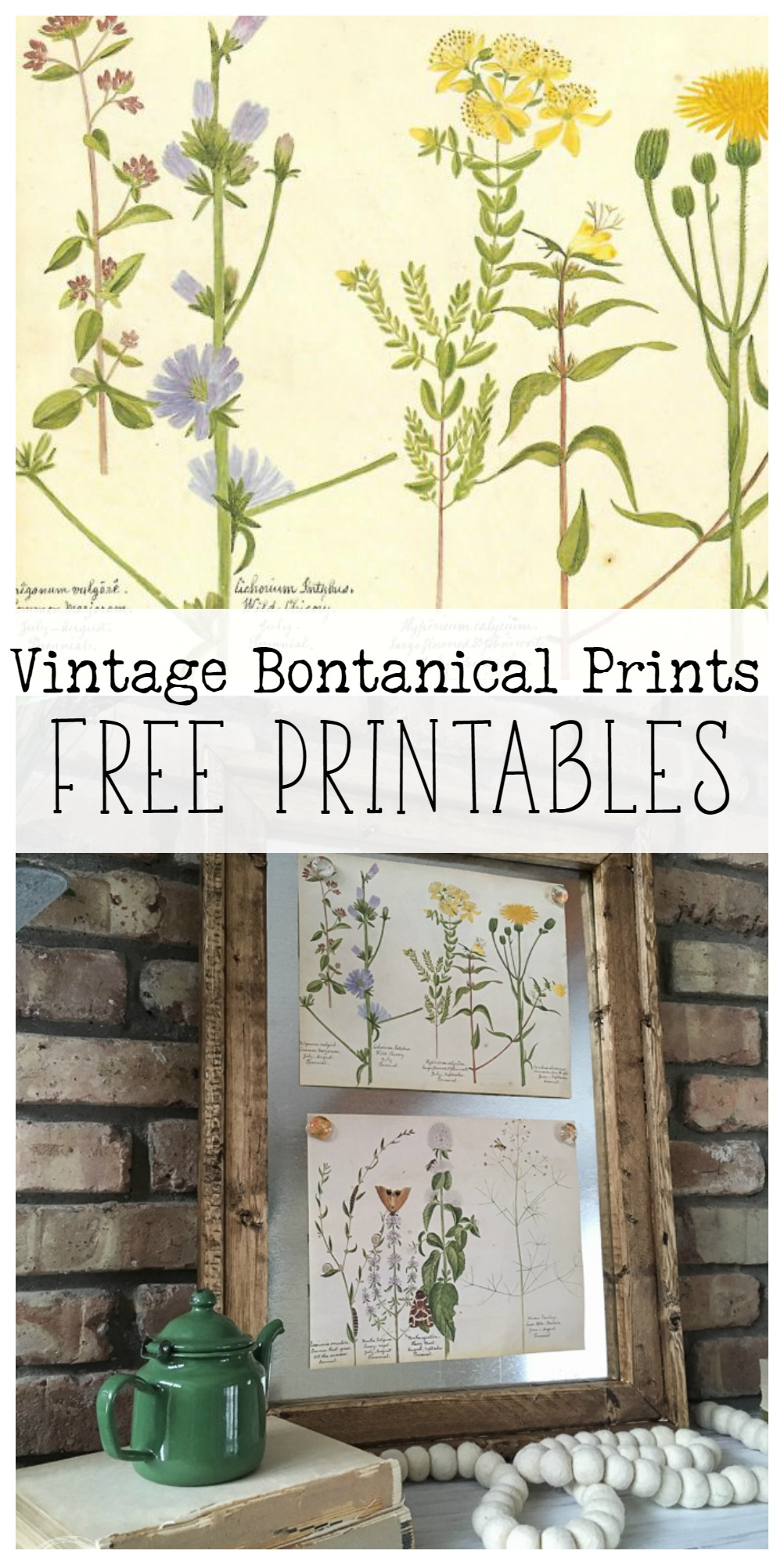 picture about Free Printable Vintage Images referred to as traditional botanical prints absolutely free printable - Refresh Residing