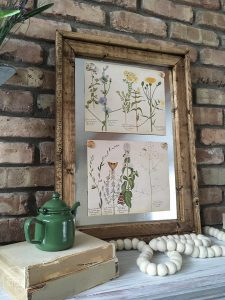 Four free vintage botanical prints are the perfect way to decorate for spring!