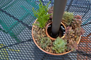 Plant a succulent garden in a jello mold to fit around an umbrella pole - genius! I see these at the thrift store all the time. Now I need to pick one up!
