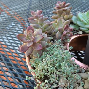 Follow these steps on how to plant succulents and they'll survive forever!
