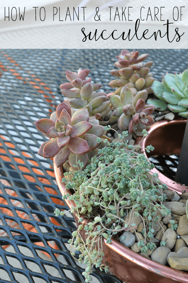The Best Way To Plant Succulents So They Survive For A