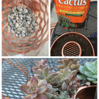 Follow these steps on how to plant succulents and how to keep them alive indoors.