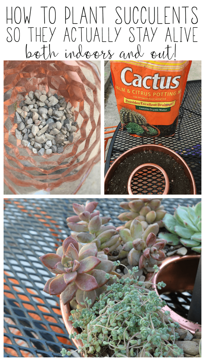 The Best Way To Plant Succulents So They Survive For A Long Time Refresh Living