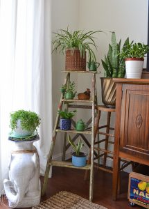 Use a vintage ladder to create a collection of plants in the corner of the living room,