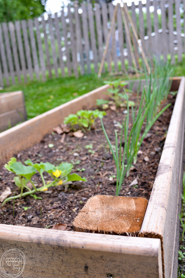 Fill Raised Garden Beds   Retro Epic Games on