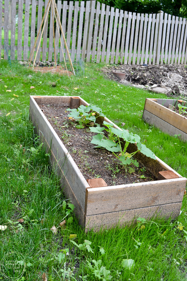 How to make raised garden beds and what soil to fill raised beds with 3 refresh living for How to fill a raised garden bed