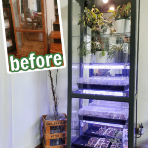 Indoor greenhouse with strip grow lights for starting seeds
