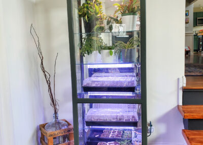 DIY Indoor greenhouse made from an old display cabinet